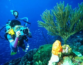 Sea Diving Program in Koh Damlaung & Koh Tang Islands / off-Sihanoukville Coast