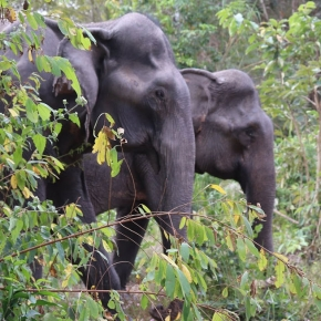 A New Activity in Siem Reap, a New Sanctuary for Elephants at Kulen Elephant Forest