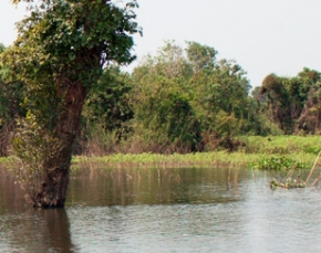 Unprecedented low water level of Tonlé Sap Lake